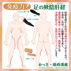 足の厥陰肝経(あしのけついんかんけい)